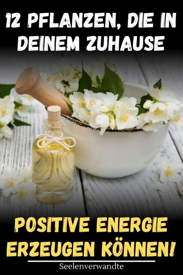 12 Pflanzen, die in deinem Zuhause positive Energie erzeugen können!